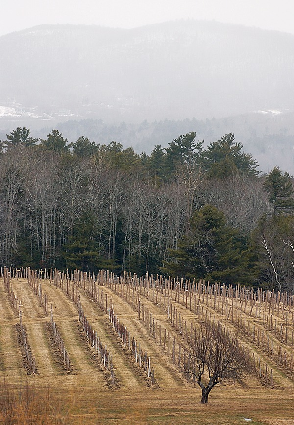 The five-and-a-half acre vineyard at the Cellardoor Winery in Lincolnville contains four varieties of grapes the company plans make wine from by 2012. They currently import their grapes from the West Coast. Photo taken on Thursday, March 4, 2010. BANGOR DAILY NEWS PHOTO BY BRIDGET BROWN