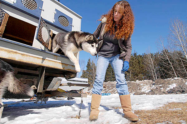 &quotWHO LET THE DOGS OUT?&quot  Musher/owner Jaye Foucher of Ashland, NH  lets an eager &quotNukilik&quot --one of her Siberian huskies, out of her dog truck after arriving at Lonesome Pine Train Trails in Fort Kent, Maine Friday afternoon. She said she and 11 of her huskies left New Hampshire around 4:30 a.m. Friday after one of her other Siberian huskies gave birth to seven puppies Thursday. Foucher took 12th place in the 2008 Can-Am 250 and 21st place in 2007. BANGOR DAILY NEWS PHOTO BY JOHN CLARKE RUSS