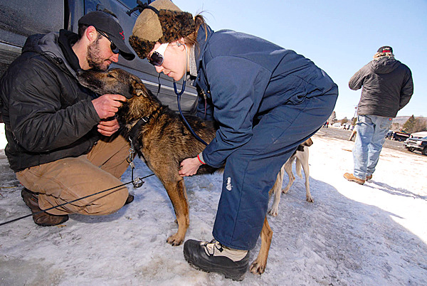Matt Carstens, left, of Whitefield, NH comforts &quotIceman&quot, one of his Alaskan huskies as veterinarian Earlgladeen MacGregor of Vancouver, CAN checks his vitals during the the veterinary examinations for the dogs at Lonesome Pines Trails in Fort Kent Friday, March 5, 2010. Carstens is one of 27 mushers entered in this year's Can Am Crown 250 mile sled dog race this weekend. He and his dog team won the race in 2009 and 2006.  BANGOR DAILY NEWS PHOTO BY JOHN CLARKE RUSS