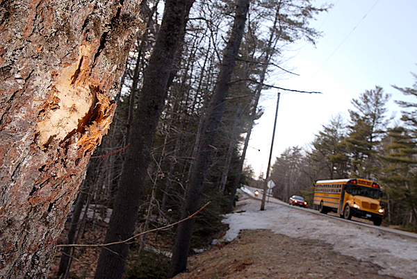 Old Town High School student Cody Hamm,16, lost control of his car late Sunday and crashed into this pine tree (seen on left) off Route 16,a short distance from his family's home in Alton. Photographed Monday afternoon, March 8, 2010. BANGOR DAILY NEWS PHOTO BY JOHN CLARKE RUSS