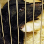 Dogs rescued from home in Enfield now recovering