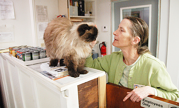 A Himalayan cat named Tigger gets petted by Meg Crocker-Curtis, manager of the  Penobscot Valley Humane Society shelter in Lincoln on Wednesday, near two cases of donated dog food. The cases came from residents who were looking to help six dogs rescued from an Enfield home by state officials. BANGOR DAILY NEWS PHOTO BY NICK SAMBIDES JR.