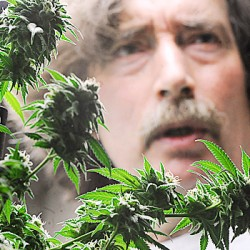 Medical marijuana on court's docket