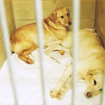 Six more dogs euthanized in Enfield-Lincoln case