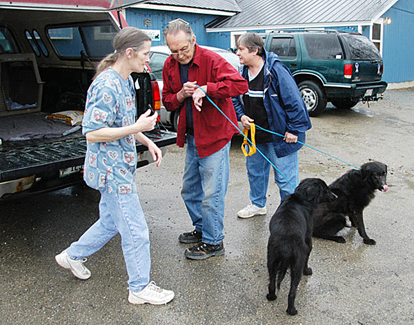 Penobscot Valley Humane Society Manager Meg Crocker-Curtis [left to right], an unidentified shelter volunteer and Helen Kazura, a volunteer with Almost Home Rescue of Ellsworth, struggle to get two Labrador mix dogs into the back of Kazura?s pickup truck at the Lincoln shelter on Tuesday. The two dogs are the first adopted out of seven rescued from an Enfield home last week. BANGOR DAILY NEWS PHOTO BY NICK SAMBIDES JR.