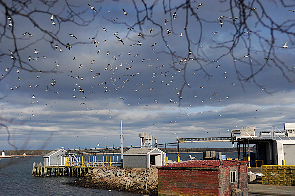 Thousands of seagulls hover above the former Stinson Seafood Plant in Prospect Harbor late Thursday afternoon, February 18, 2010. Bumble Bee Foods, the current plant owner notified employees Wednesday, February 17 that the plant will close in April after being a fixture there for over 100 years. BANGOR DAILY NEWS FILE PHOTO BY JOHN CLARKE RUSS