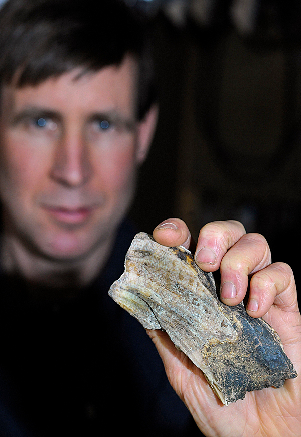 Lin White, oner of Park's Hardware in Orono, holds up a walrus tusk fragment he found in 2008 while working near the Stillwater River with the Orono Land Trust.  White recently enlisted the help of U Maine Professor Emeritus Professor George Jacobson (not pictured) and some of his academic colleagues in the field to determine the that this tooth fragment belonged to a walrus that probably lived about 13,000 years ago. Photographed February 24, 2010 at Park's Hardware. BANGOR DAILY NEWS FILE PHOTO BY JOHN CLARKE RUSS