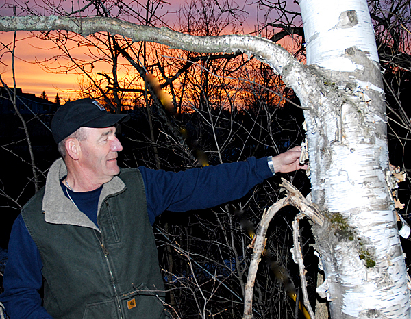 Bark collected from a white birch near the source of Easter water is said to bring good luck, joy and bliss for the rest of the year. Tom Ouellette met the sun Easter morning as he went in search of running water and the special bark. PHOTO BY JULIA BAYLY