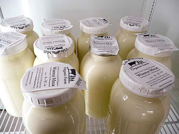 Rows of fresh, whole milk from Tide Mill Farm in Edmunds await customers at the Machias Marketplace. Tide Mill is one of six area farms that supply food and products to the Machias buying club. BANGOR DAILY NEWS PHOTO BY SHARON KILEY MACK