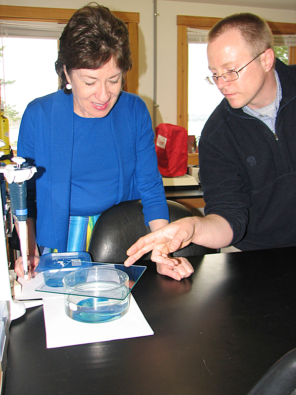Dr. Randall Dahn of Mount Desert Island Biological Laboratory in Bar Harbor points to the body of a teacup stingray in a lab dish on Tuesday while explaining his research to U.S. Sen. Susan Collins. MDI Bio Lab is expected to receive $1.6 million from Department of Defense to fund research into how some vertebrate species can regrow limbs. BANGOR DAILY NEWS PHOTO BY BILL TROTTER