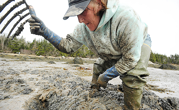(BANGOR DAILY NEWS PHOTO BY GABOR DEGRE)  CAPTION  Anna German, 42, of Milbridge has been digging blood worms for ten years. &quotIt is hard work, but I love the freedom,&quot she said, while digging on the mud flats in South Addison Tuesday,  April 6, 2010.   (Bangor Daily News/Gabor Degre)