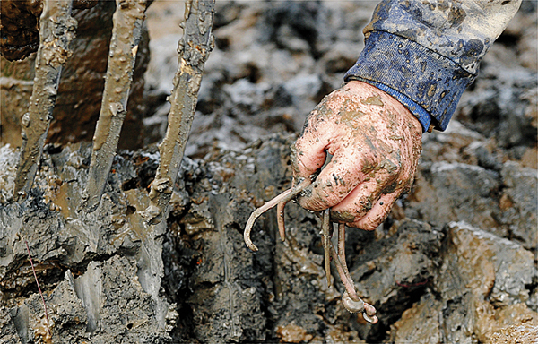 (BANGOR DAILY NEWS PHOTO BY GABOR DEGRE)  CAPTION  Richard Sprague, 42, of Milbridge holds several blood worms while digging on the mud flats in South Addison Tuesday, April 6, 2010.   Sprague has been digging for worms most of his life and loves the freedom that comes with the work.  &quotIf the worms are not up, sometimes you dig for a week and make the same money as you make on a good day.&quot (Bangor Daily News/Gabor Degre)