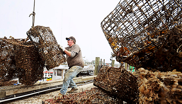 Stonington lobsterman Russell Bray guides old traps as they are unloaded from a lobster boat at the Stonington Town Pier Wednesday.  It was the second of two days when the Gulf of Maine Lobser Foundation with the help of fishermen grappled for &quotghost gear&quot in the Stonington area.  Among other things hauiling out the old traps provides information on how well the escape port works on the traps that is fastened with biodegradable material. BANGOR DAILY NEWS PHOTO BY GABOR DEGRE