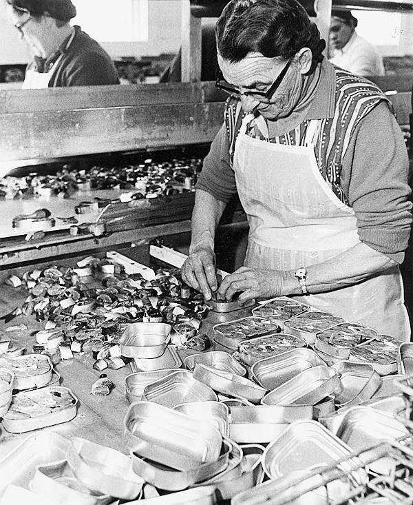 Susan Eaton, a packer for Port Clyde Foods Inc., packs herring steaks into tins at the  plant in Stonington in this March, 1982 file shot. BANGOR DAILYNEWS FILE PHOTO BY BOB DELONG
