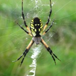 Giant hairy spiders create panic in India