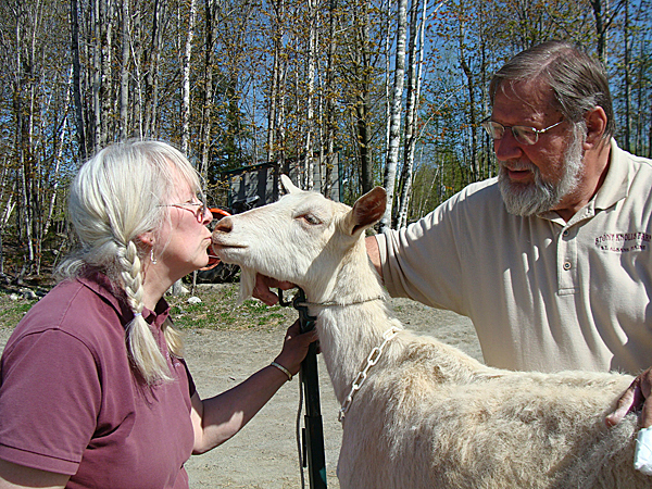 After clipping the hooves of Chami on Saturday, Ken Spaulding holds the  goat while his wife, Janice Spaulding gets a kiss from the animal. BANGOR DAILY NEWS PHOTO BY DIANA BOWLEY