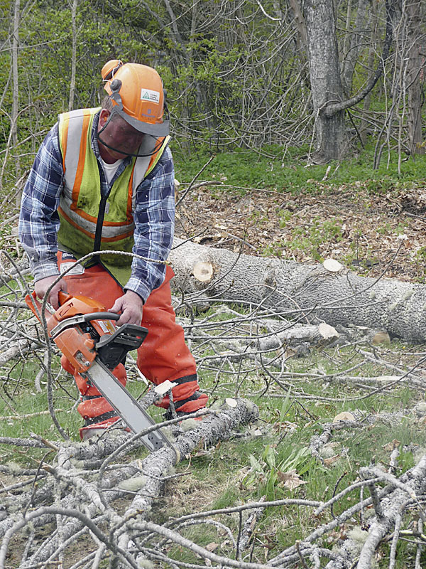 Tim Carlson of Stanhope's Construction of Robbinston trims a white ash tree during clearing for a new rangers and welcome station at the Saint Croix Island International Historic Site in Red Beach at Calais. The new station should be completed by August and is part of a plan to upgrade services for the next 15 to 20 years. Ranger Meg Scheid said &quotOur site is about the meeting of two worlds, the Native Americans and the French.&quot Samuel Champlain and Pierre Dugua of France founded a settlement on Saint Croix Island in 1604, three years before Jamestown, Virginia, was settled and 16 years before the Pilgrims landed at Plymouth, Mass. The ash tree is being given to the area's Passamaquoddy Tribe for use in traditional arts, such as basket making. BANGOR DAILY NEWS PHOTO BY SHARON KILEY MACK