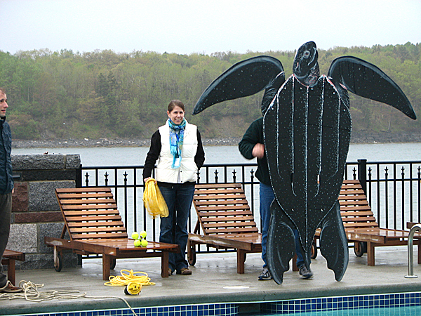 Carrie Upite of National Oceanic an Atmospheric Administration stands next to a large plywood leatherback turtle on Saturday at the Bar Harbor Club. Upite was assisting in a demonstration of how to disentangle sea turtles from lines or fishing gear in the water. The demonstration was part of the 2010 Northeast Region Stranding Network Conference held this week in Bar Harbor, which attracted more than 50 people from Northeast states to Mount Desert Island.  BANGOR DAILY NEWS PHOTO BY BILL TROTTER