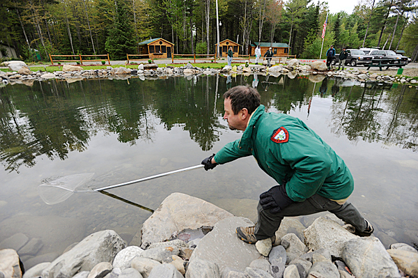 Brian Campbell,  a fisheries biologist with the Maine Dept. of Inland Fisheries and Wildlife's Enfield office, uses a net to retrieve goldfish in a fish pond at Wildwood Trailside Cabins in Brownville, Maine. Campbell and other DIF&W officials visited the site to remove and relocate some of the goldfish in the man-made outdoor pond there because it is illegal to have exotic/noxious invasive fish species in outdoor ponds in Maine. BANGOR DAILY NEWS PHOTO BY JOHN CLARKE RUSS