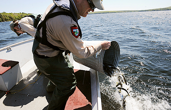 Gregory Burr assistant regional fisheries biologist dumps landlocked salmon into the water of Branch Lake Thursday afternoon in Ellsworth.  Branch Lake has not been stocked by the state in over ten years due to the lack of adequate public access.  The state and the city came to an agreement about establishing a public landing on the lake.  The Department of Inland Fisheries and Wildlife stocked the lake with 1350 fish from the Grand Lake Stream hatchery. BANGOR DAILY NEWS PHOTO BY GABOR DEGRE