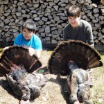 Gobbling for gobblers, or how to call turkeys like a choking cat