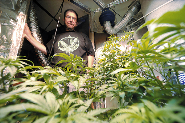 In a growing room in his home in Pittsfield, Jim Fowler looks over some of his medical marijuana crop that he is growing for himself and several area patients. In March of this year, Fowler was busted by the DEA for growing marijuana plants, most of which were confiscated. Fowler who grows marijuana to alleviate symptoms of his degenerative disc disease, said he was unjustly busted, because he has permission to grown his own medical marijuana and is growing for several others. (Bangor Daily News/John Clarke Russ)