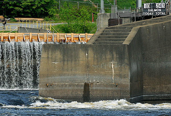 (BANGOR DAILY NEWS PHOTO BY JOHN CLARKE RUSS)CAPTIONA view of Veazie Dam, seen from the Bradley side of the Penobscot River Tuesday, May 25, 2010. A running total of the  salmon count can be seen atop a tally board over the dam's fish ladder (upper right of photo). There were actually 9 salmon found in the trap Tuesday, May 25, 2010 bringing the correct total to 242 salmon counted between May 3 and May 25, 2010. (Bangor Daily News/John Clarke Russ)