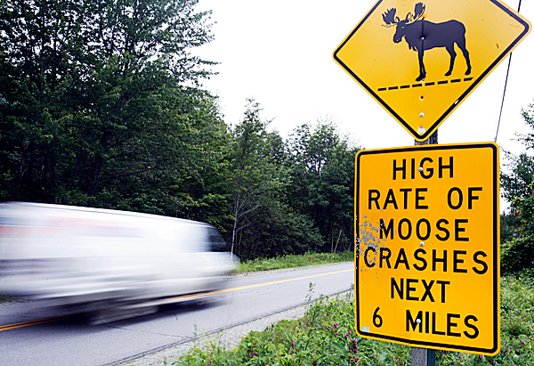 In this July 2009 photo, a road sign warns motorists to be aware of  moose in the area, near North New Portland, Maine. In Maine, which has the nation's biggest moose population outside Alaska, moose have caused crashes across the state, even in cities where motorists don't expect them.&quotThey're everywhere. Moose is Maine's most deadly animal,&quot said Stephen McCausland, spokesman for the Maine Public Safety Department in Augusta. AP PHOTO BY PAT WELLENBACH