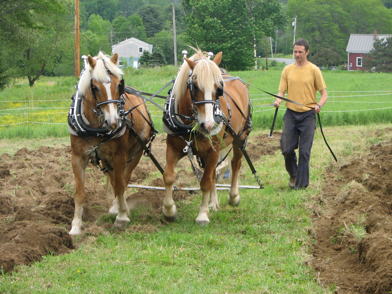 Plowing workshop features horses, mules — Midcoast — Bangor Daily