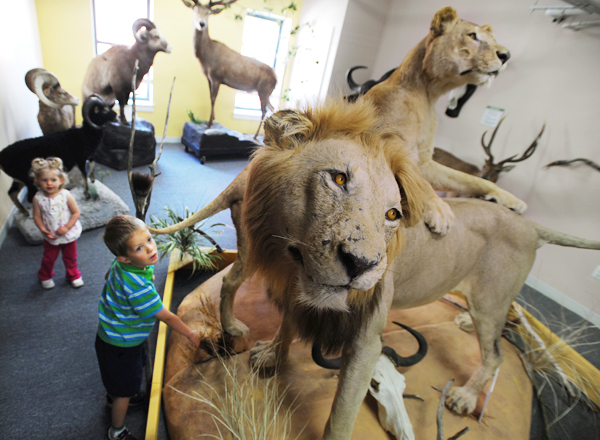 Barrett Walker, right, and his sister, Vivian, of Skowhegan explore a display of African Lions at the Maine Discovery Museum in Bangor on Wednesday, June 9, 2010. A new exhibit, SAFARI,  features numerous trophy animals from Asia, Africa, Europe and the Americas. Visitors are allowed to gently touch many of the stuffed displays. The children were visiting the museum with their mother, Abby Walker.(Bangor Daily News/Kevin Bennett)