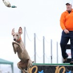 Maine dogs dive into a wet sport