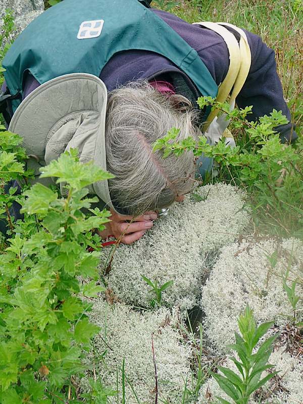 Amateur botanist Marilee Lovit of Addison gets a closer look at a variety of lichen growing on Tibbett Island. BANGOR DAILY NEWS PHOTO BY SHARON KILEY MACK