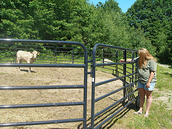Lisa Taylor-Carter, whose family has befriended a young female beefalo that has been on the loose for a month and a half, calls to the skittish animal, named Chloe, inside a pen at the Carter residence, more than a mile from where the animal got loose. BANGOR DAILY NEWS PHOTO BY RICH HEWITT