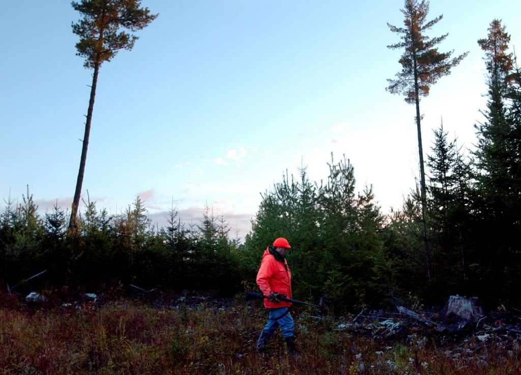 SIGN OF THE SEASON    Chris Lander of Orrington hunts for moose at first light Monday morning in the Maine woods near Northeast Carry. Lander has entered Maine's moose lottery for a hunting permit every year since the hunt began in 1980 and though he's never been drawn, Lander gets to hunt this year as a subpermittee. (BANGOR DAILY NEWS PHOTO BY BRIDGET BROWN)