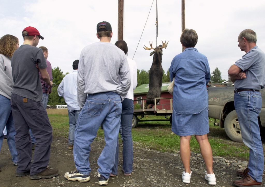 Spectators watch as a bull moose is weighed at the tagging station at Gateway Variety in Ashland on Monday, the first day of the split-moose hunt. The moose, which weighed in at 826 pounds, was tagged by brothers Jeff and Peter Fogg of Holden.