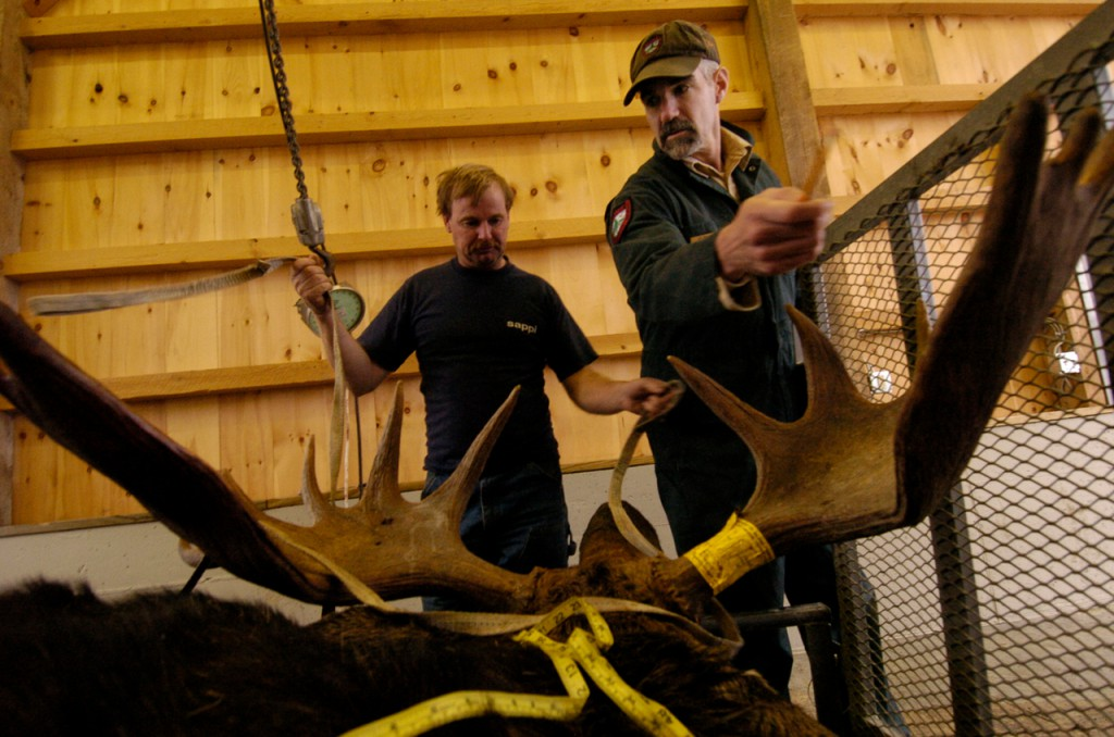 Lee Kantar (right), a department of Inland Fisheries and Wildlife biologist, counts the 16 points on a moose at the DIF&W tagging station in Greenville Monday. The moose was shot near Moxy Pond by Paul Prosser (left) and it weighed about 825 pounds and its rack reasured 48.5 inches. Prosser downed the moose from about 150 yards. The second week of the split, two-week moose-hunting season ends Saturday.  (BANGOR DAILY NEWS PHOTO BY JOHN CLARKE RUSS)  CAPTION  Moose-hunt-JCR.jpg At the Maine Inland Fisheries and Wildlife tagging station in Greenville Monday afternoon, Lee Kantar ( right) , an I.F.W. wildlife biologist, counts the 16 points on a moose bagged near Moxy Pond by Paul Prosser (left) around 7 am Monday. The moose weighed 825 pounds, the rack measured 48.5 inches and Prosser said he used a 300 Remington Magnum rifle at a range of approximately 150 yards. ( Bangor Daily News/ John Clarke Russ)