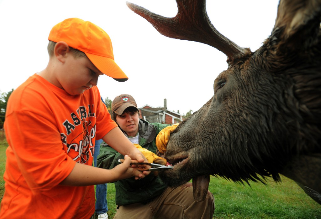 Roy Whalen III (left), 7, of Sullivan gets some help from biology tech Heidi Johnston while removing a tooth from his father's bull moose at Gateway Vareity in Ashland on Monday morning. Monday marked the first day of the traditional split-session moose season in Maine. The moose weighed 628 pounds.  (BANGOR DAILY NEWS PHOTO BY KEVIN BENNETT)  CAPTION  Roy Whalen III, 7, left, of Sullivan gets some help from biologist tech Heidi Johnston while removing a tooth from his father's bull moose at the tagging station at Gateway Variety in Ashland on Monday, September 28, 2009. Whalen's moose weighted in at 628 pounds. (Bangor Daily News/Kevin Bennett)