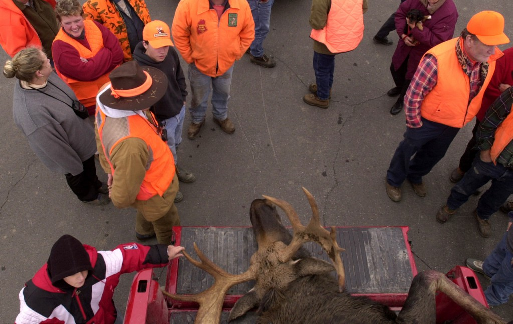 A crowd in Greenville gathers around a moose shot by Gary Clifford and Jared Pulsifer of Bristol during last week's annual moose hunt. The state issued 3,000 permits for this year's hunt. (NEWS Photo by Anthony Robert La Penna)