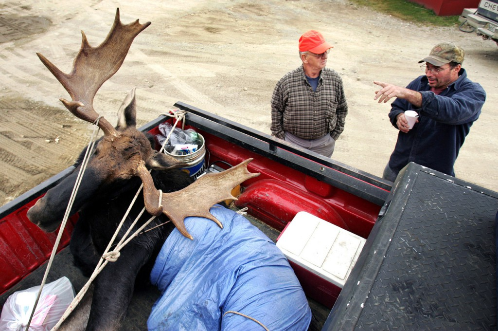 Steve Gentili (right) of Rome tells the story of his friend Kate Foster's successful hunt to Herbert Reynolds of Etna at the weigh-in station in Kokadjo on Wednesday.  Foster, a 17-year-old from Belgrade, shot the 777-pound bull, which had an antler spread of 48 inches.  (AP Photo/Robert F. Bukaty)