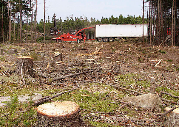 with Trotter's &quottreefuss.&quot Cutline as follows:  A piece of equipment mulches cut trees in the background Wednesday afternoon while workers clear land to put in a 100-space parking lot at Schoodic Education and Research Center in Acadia National Park. The tree cutting has upset several Schoodic area residents and park supporters who have said Acadia officials did not do enough to publicize their renovation plans. BANGOR DAILY NEWS PHOTO BY BILL TROTTER