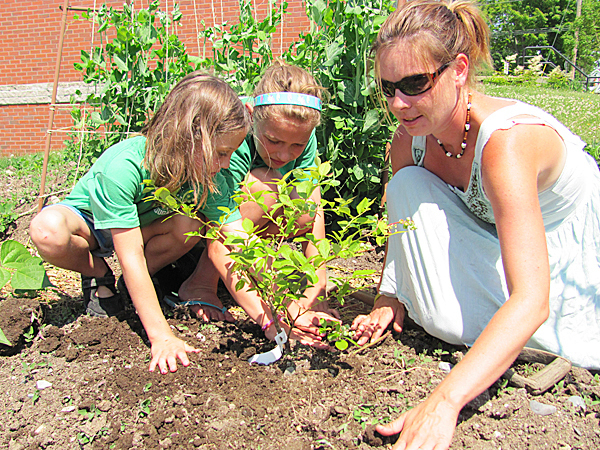 Amber (left) and Leah Savage of Cornville help Heather Davis of Cayford Orchards in Cornville plant a blueberry bush at the downtown Skowhegan Farmer's Market on Saturday.  Buy Photo