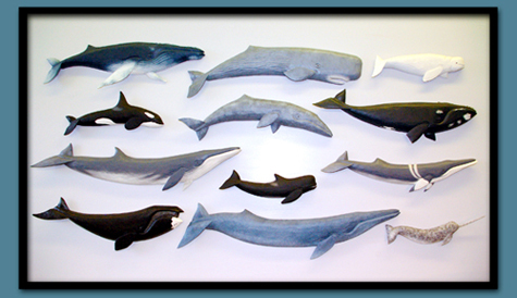 These 12 whale carvings are a new series of painted wood carvings created by Chip Slimak and Rose Kern, who operate a fine folk art business from their home in Morrill. From left to right, Row 1: Humpback, sperm and beluga whales; Row 2: Orca, gray and right whales; Row 3: Fin, pilot and minke whales; Row 4: Bowhead, blue and narwhal.
