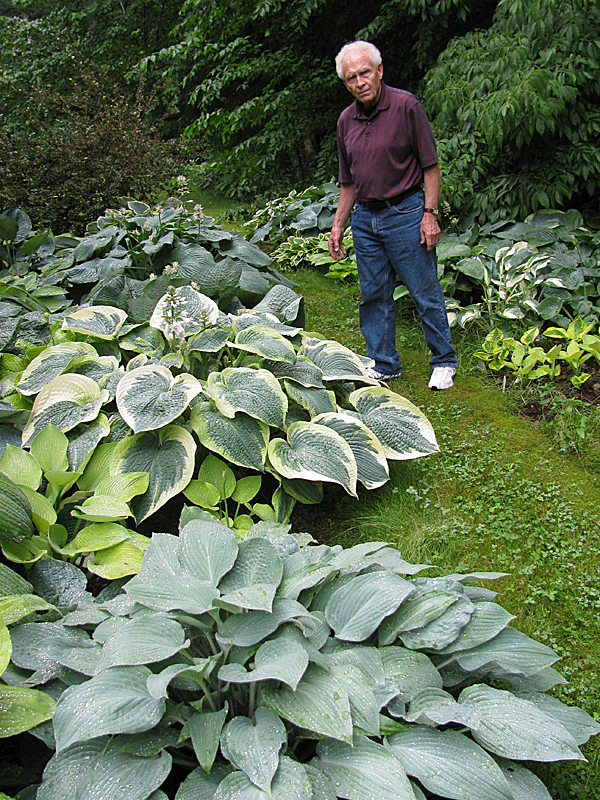 BELFAST - Ron Dow stands among some of the many hostas in his Hosta Gallery at his home on the Back Belmont Road. Dow is holding open garden days this weekend to celebrate the Hosta Gallery's fifth year in Belfast. BANGOR DAILY NEWS PHOTO BY ABIGAIL CURTIS
