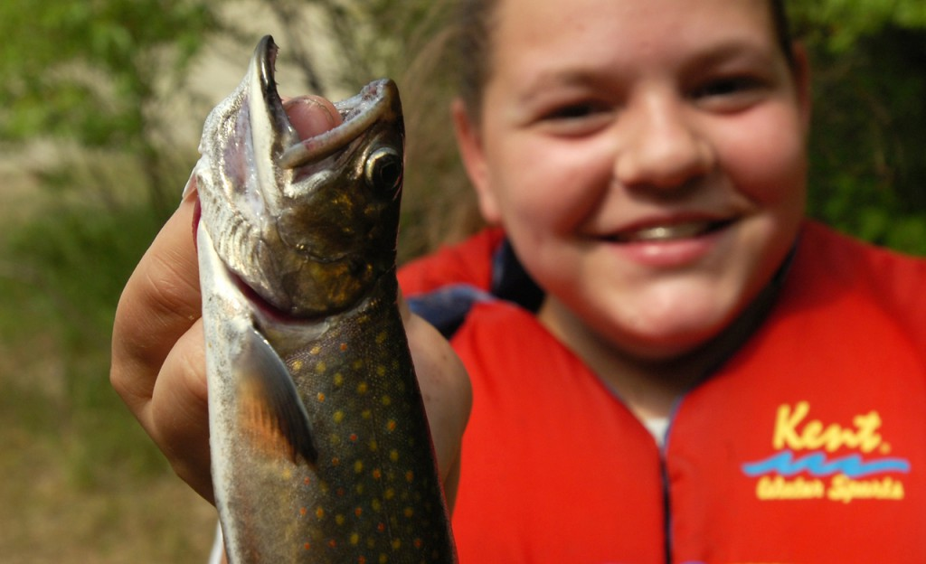 Laura Vaillancourt, 12, of Milford shows off the brook torut she caught in Pickerel Pond this week during Maine's Youth Fish and Game Association sumemr camp in T-32 MD.  (BANGOR DAILY NEWS PHOTO BY GABOR DEGRE)  CAPTION  Laura Vaillancourt, 12, of Milford shows off the brook trout she caught in Pickerel Pond at the maine Youth Fish & game Association summer camp in T-32 MD.  The kids have the option to release or take home the fish they caught. They are taught about the size limitation and giving the small fish the time to grow. photo: gabor degre/ bangor daily news/ merlin