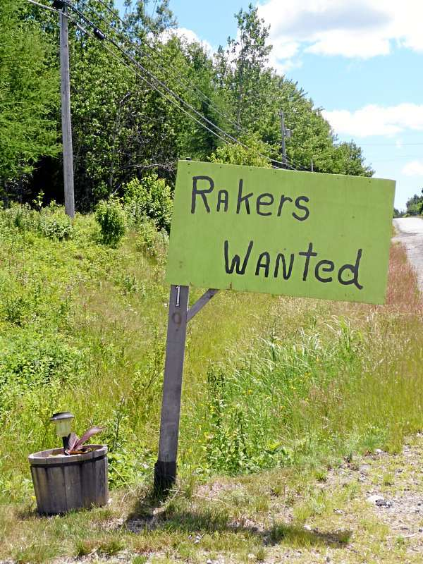 A sign for &quotrakers wanted&quot on Route 1 in East Machias is one of many that have been popping up this week Downeast. Experts said that like every other crop this year, blueberry season will start early this year. Rakers usually hit the fields in August but could be raking by mid-July.(Bangor Daily News photo by Sharon Kiley Mack)