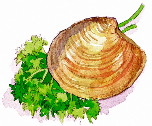 This image was produced by an application from HighWater Designs Limited.Seashell garnished with Parsley