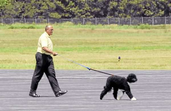 A  man walks the Obama family dog, Bo, after arriving at the Bar Harbor Airport Friday.  BANGOR DAILY NEWS PHOTO BY GABOR DEGRE