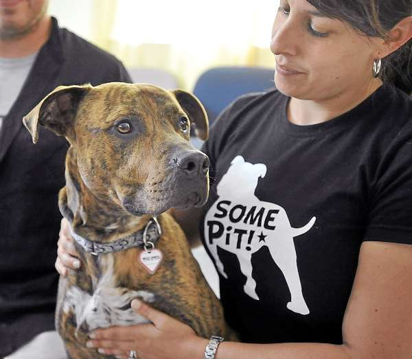 Southern Maine Pit Bulls educator Jessica Dolce shows off &quotJack&quot a 3-year-old neutered male Pitbull at the Bangor Humane Society, Saturday, July 17, 2010. (Bangor Daily News/Michael C. York)