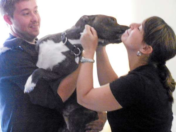 Southern Maine Pit Bulls co-founder Jessica Dolce, right, receives a kiss from Crystal, a Bangor Humane Society shelter dog, who is being held by Adam Ricci, the other co-founder of SOME Pit. The group gave a presentation Saturday iin Bangor about the misconceptions of pit bulls, which they describe as &quotsocial, affectionate, face licking sweethearts.&quot (Bangor Daily News/Nok-Noi Ricker)