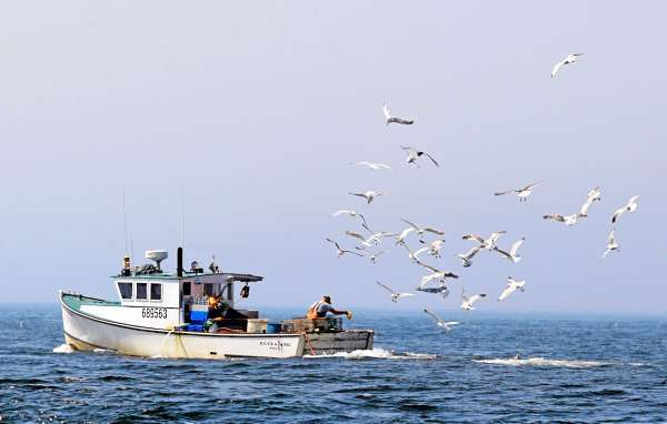 FILE-This Aug. 18, 2009 file photo shows gulls following a lobster boat looking for bait scraps off Matinicus Island, Maine. Maine's lobstermen have long lived under unofficial territorial rules dictating who can set their lobster traps where along the state's long, ragged coast. To protect lucrative fishing grounds, fishermen have been known to cut lobster trap lines, harass each other at sea and, on occasion, brandish weapons. (AP Photo/Robert F. Bukaty, File)